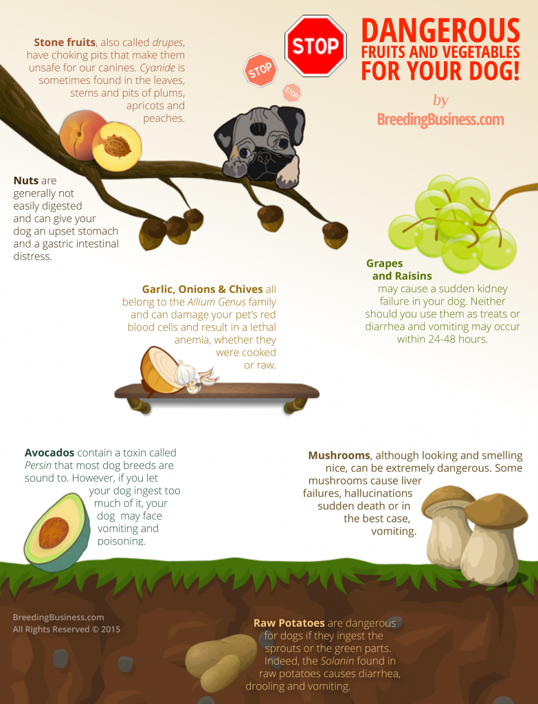 Eukanuba Puppy Food >> 10+ Best Dog Food & Nutrition Infographics Ever Made