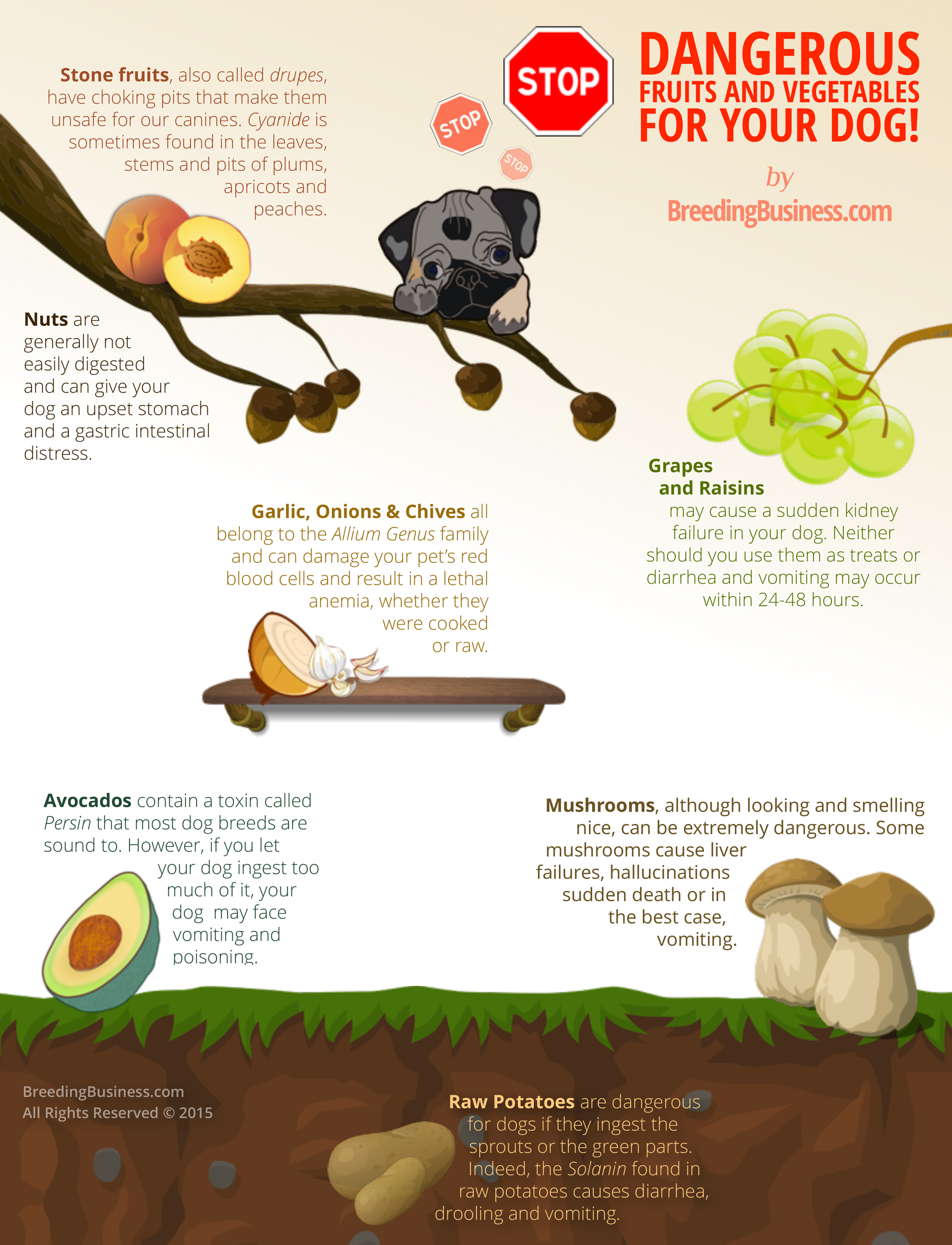 Can Dogs Eat Grapes, Raisins, Potatoes, Nuts, Mushrooms, Avocados, Peaches, Fruits and Vegetables? Are they dangerous or edible? Infographic for Dog Breeders!