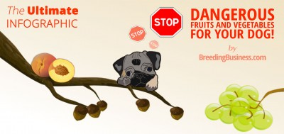 Dangerous Fruits & Vegetables For Dogs (Infographic)