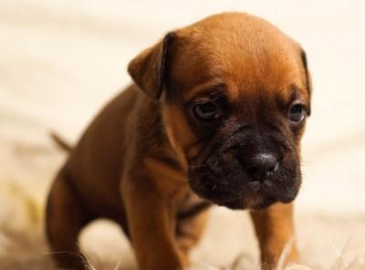 Is Dog Breeding Emotionally Hard? Yes.