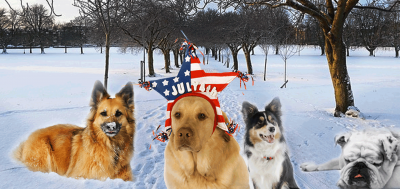 The full ranking of the most popular dog breeds in the United States (AKC)
