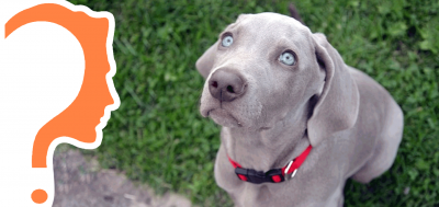 10+ Questions Dog Breeders Should Ask Puppy Buyers