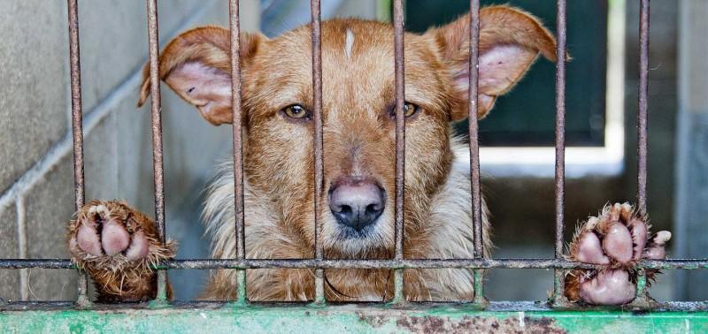 Welfare Issues Modern Dog Breeding