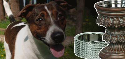11 Best Designer Dog Bowls & Luxury Dog Feeding Stations