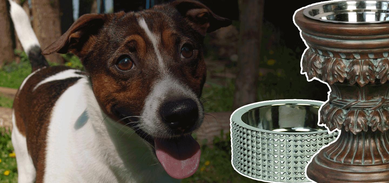 10 best designer dog bowls amp luxury dog feeding stations