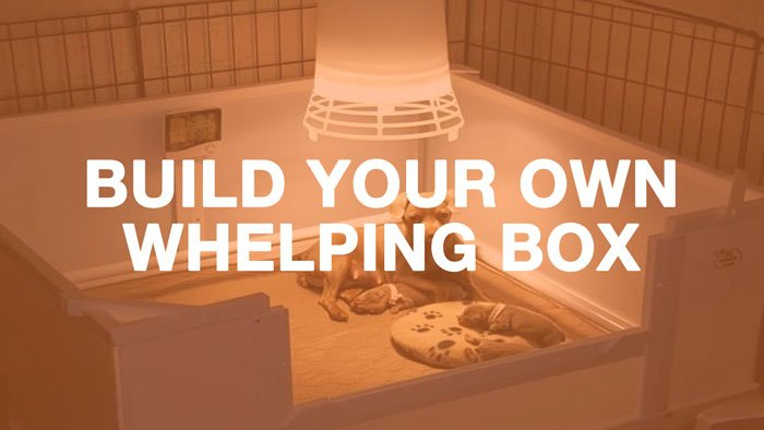 Do It Yourself Whelping Box
