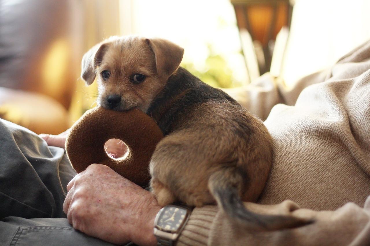 Terrier Dog Chew Toy