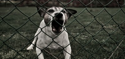 All Dog Breeders Are Puppy Mills (That's What They Say)
