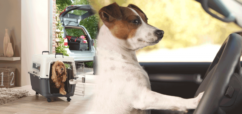 The Best Travel Dog Crates & Dog Carriers for Transportation