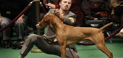 Objectivity Is Key When Breeding Purebred Dogs