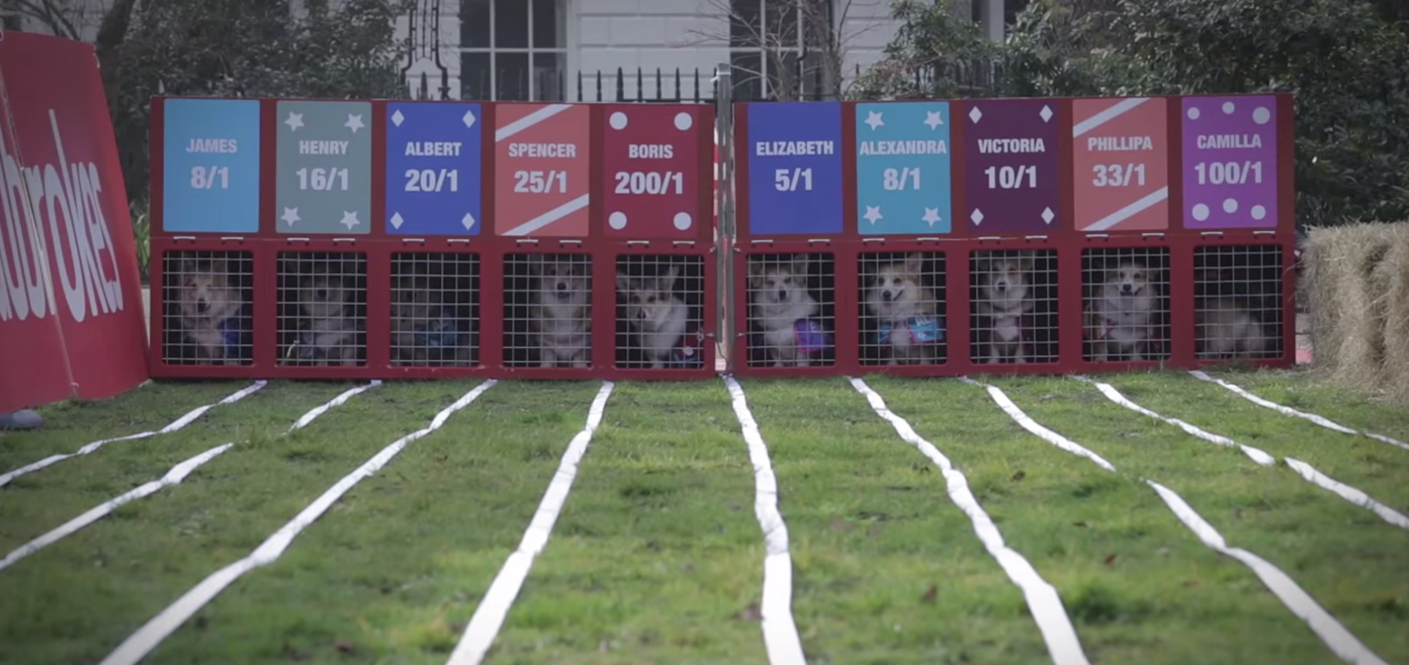 Royal Baby betting stakes were raised as 10 corgis took to the track to help punters determine the name and sex of the next Royal Baby.