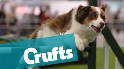 Crufts 2015, World's Largest Dog Show!