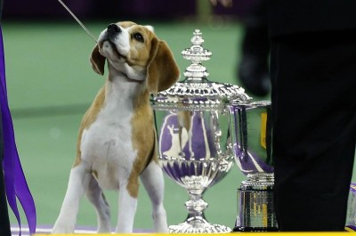 Miss P Westminster Kennel Club Dog Show 2015