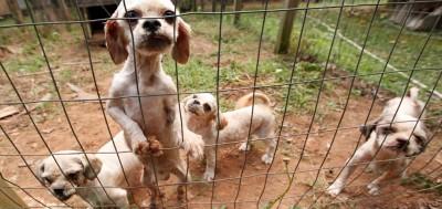 Puppy mills are not dog breeding!