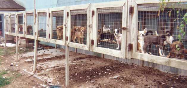 A puppy mill in Canada