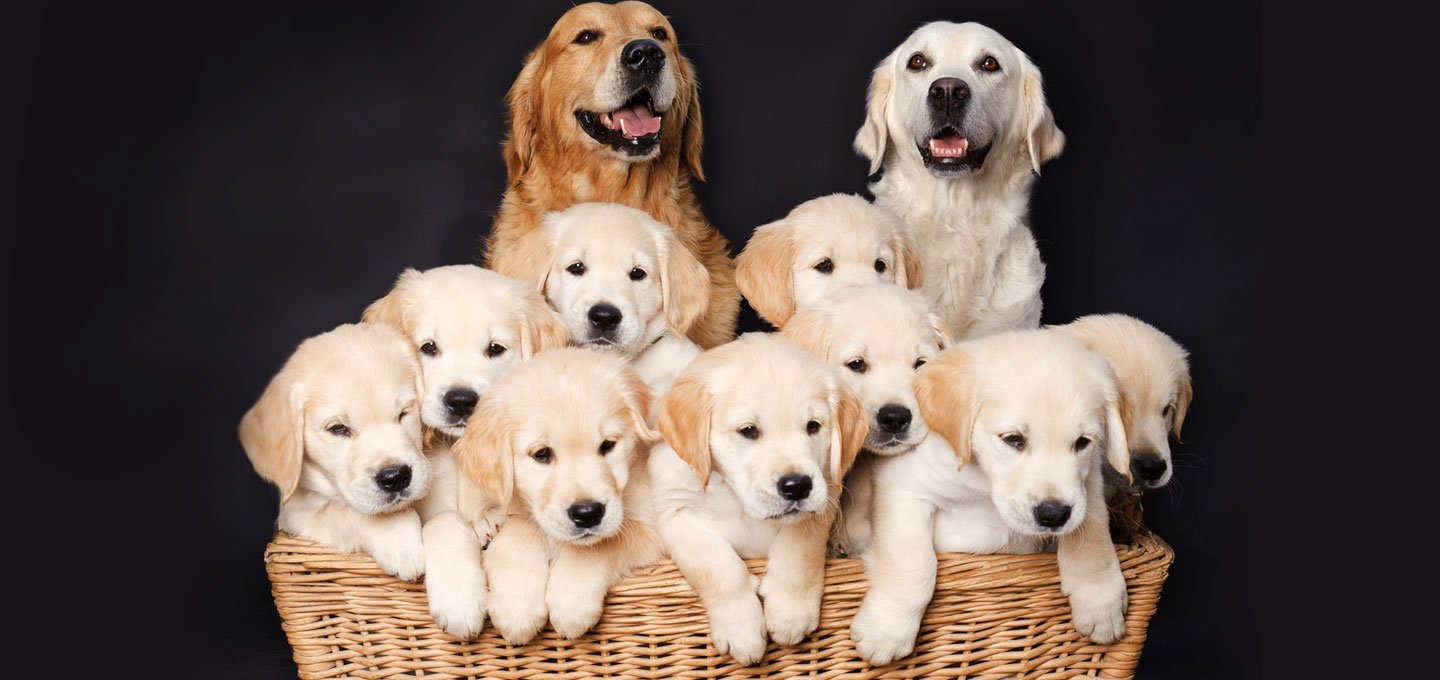 Best Online Dog Breeders