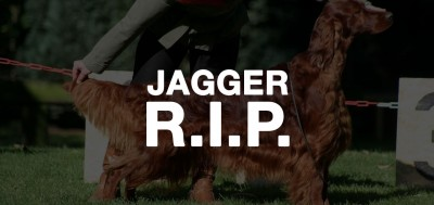 Rest In Peace, Jagger.