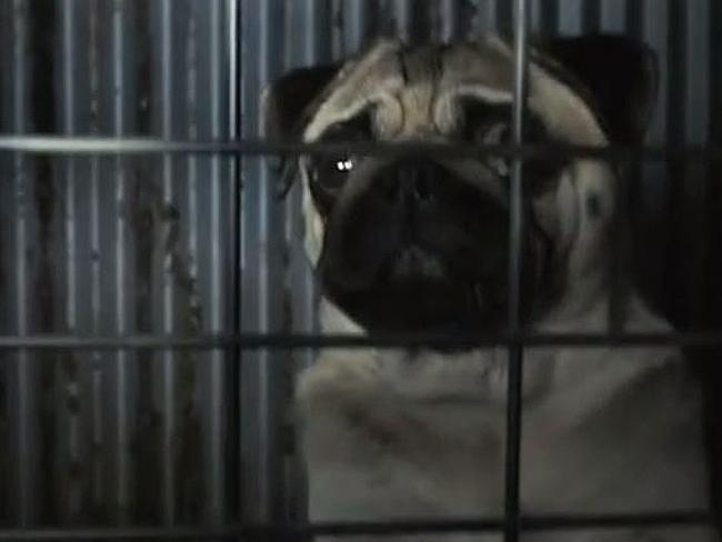 Dog Bred In a Puppy Mill