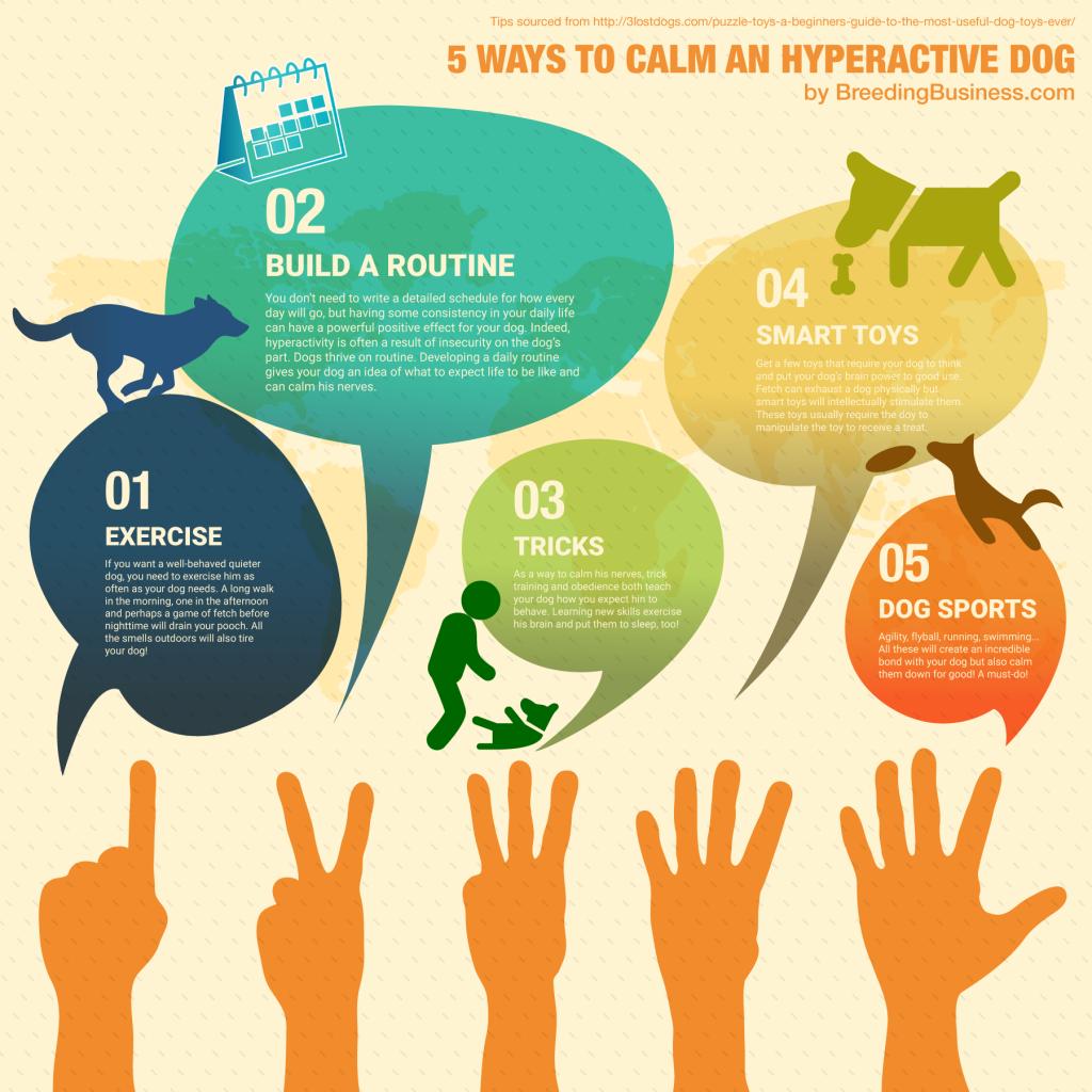 5 WAYS TO CALM AN HYPERACTIVE DOG