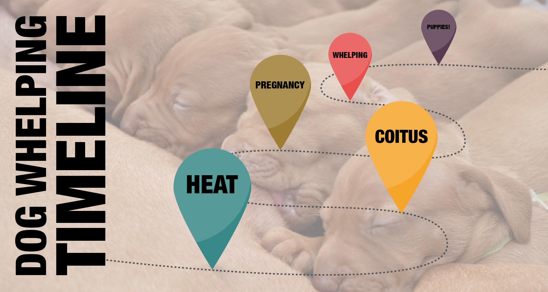 genetics and breeding strategies essays for the dog breeder