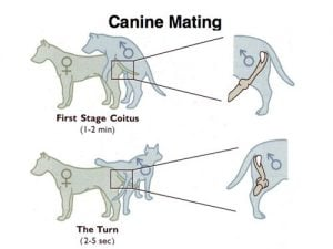 Only Dog And Cats Mating