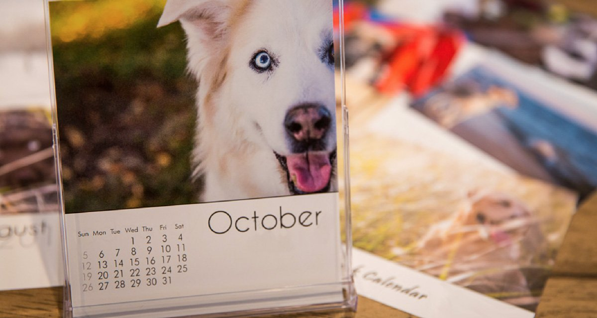 Perpetual Whelping Chart & Calculator for Dogs