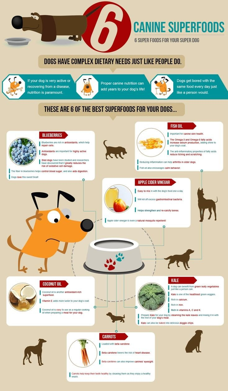 Dog Superfoods