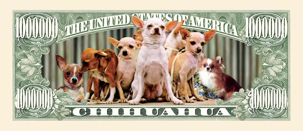 Chihuahua on a dollar bill!