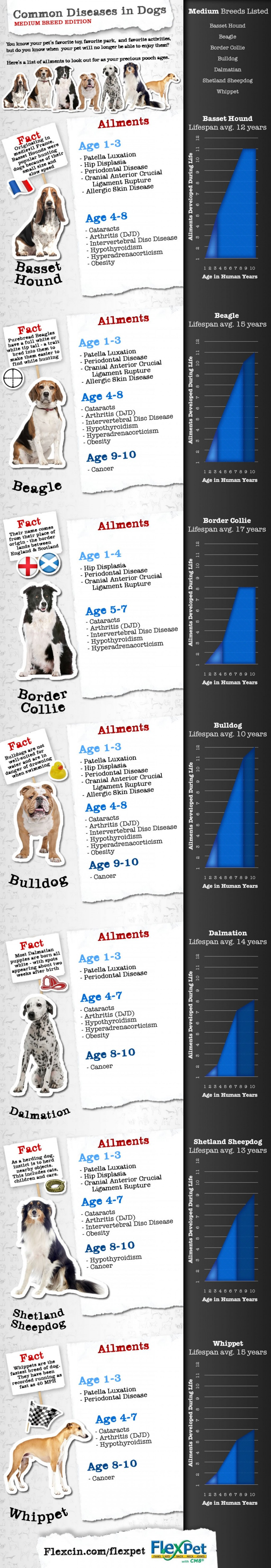 Most Common Diseases in Medium Dog Breeds