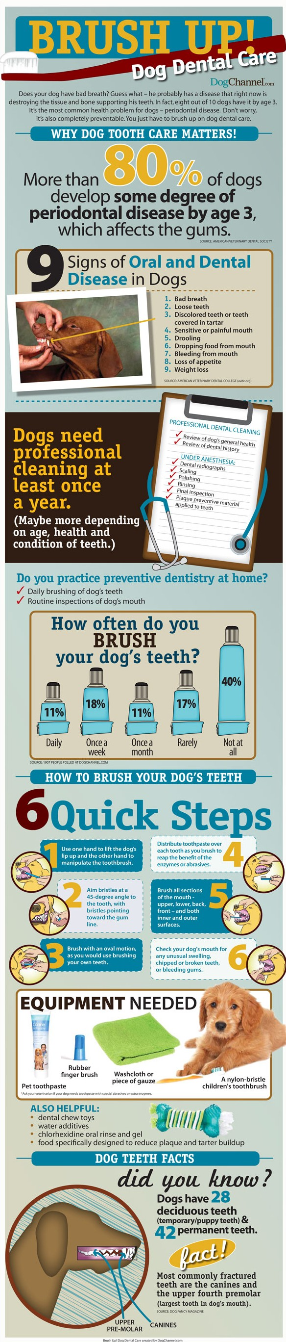 Brush Up & Look After Your Dog's Dental Care!