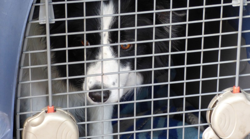 5 Best Anti Dog Theft Systems to Prevent Dog Theft