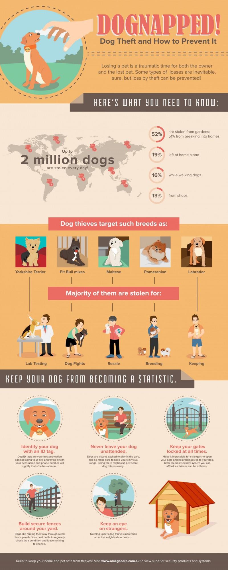 Dog Theft & Dognapping
