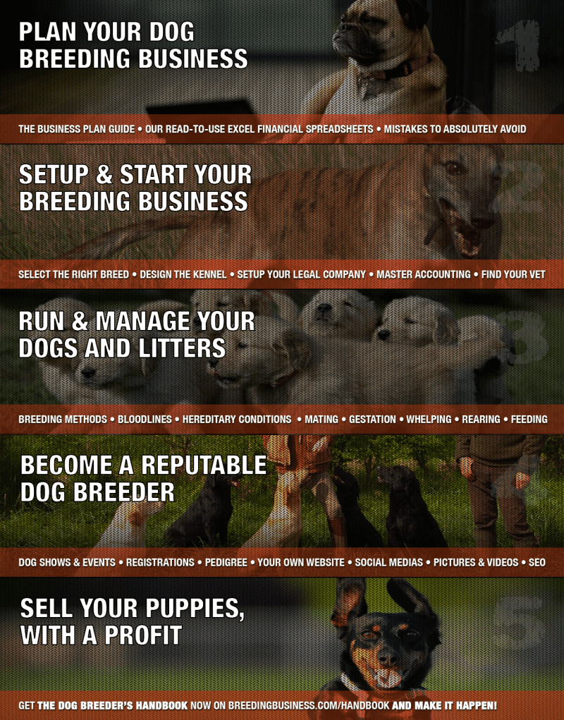 11 tips for beginners starting in dog breeding for Building a dog kennel business