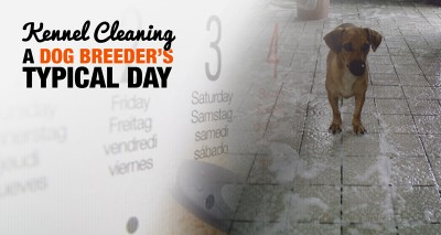 A Dog Breeder's Typical Day — Keeping The Kennel Clean