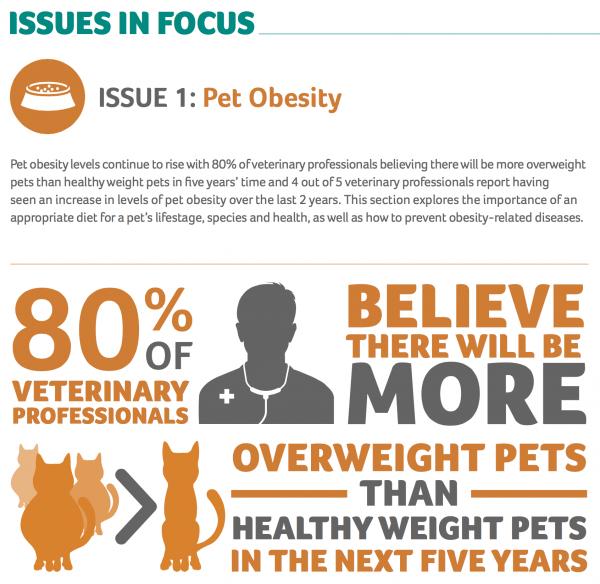 Pet obesity set to soar, warns vet charity