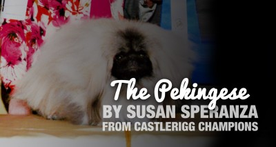 The Pekingese Breed — by Susan Speranza of Castlerigg Champions
