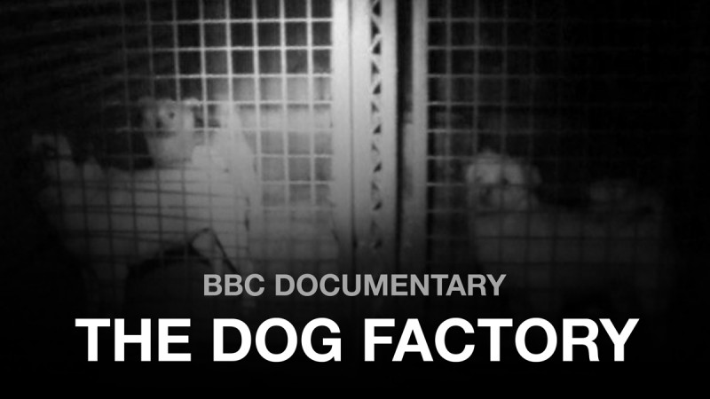 The Dog Factory BBC Documentary 2015