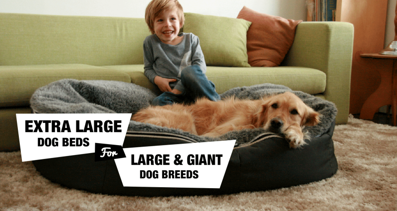 Best Extra Large Dog Beds For Dogs Giant Breeds