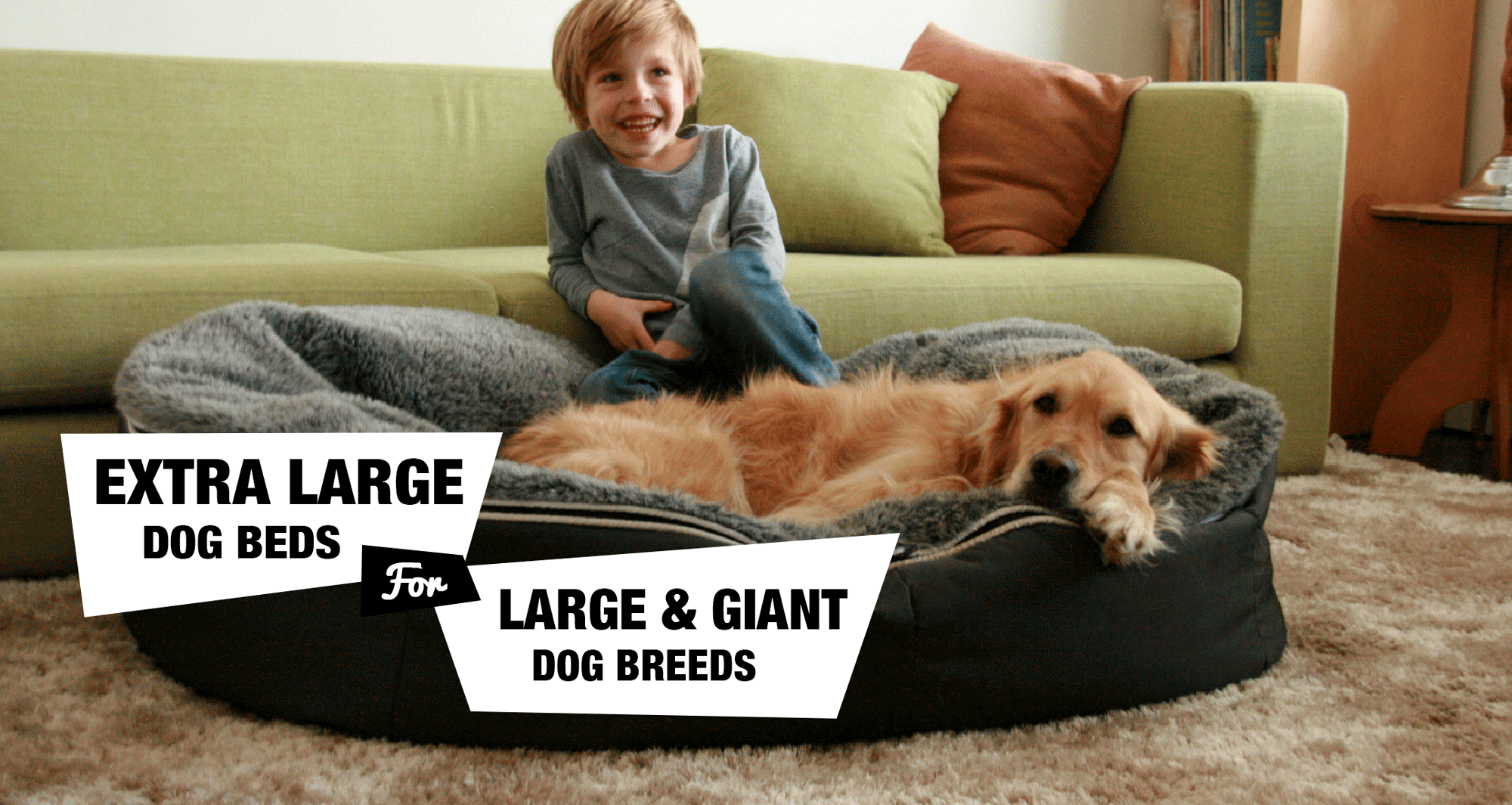 6 Extra Large Dog Beds For Xlxxl Dog Breeds Reviewed