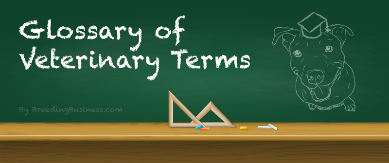 Glossary & Definitions Of Veterinary Dog Medical Terms