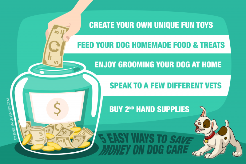 Everyday Food To Bulk Up Dog