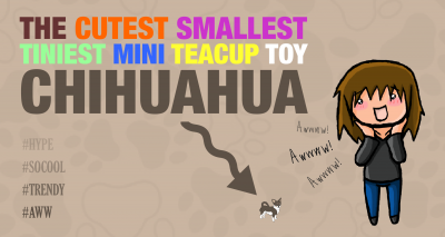 The Cutest Smallest Tiniest Mini Teacup Toy Dog