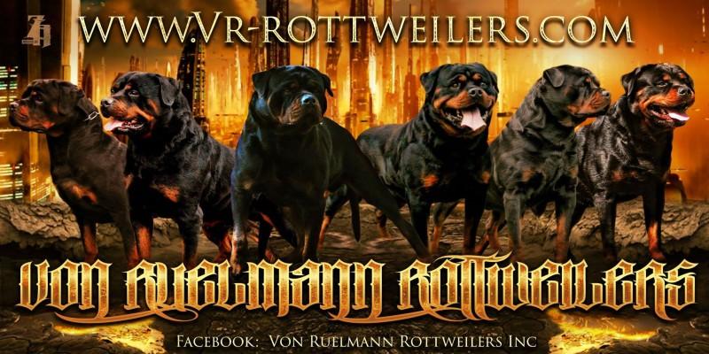 Von Ruelmann Rottweilers Banner