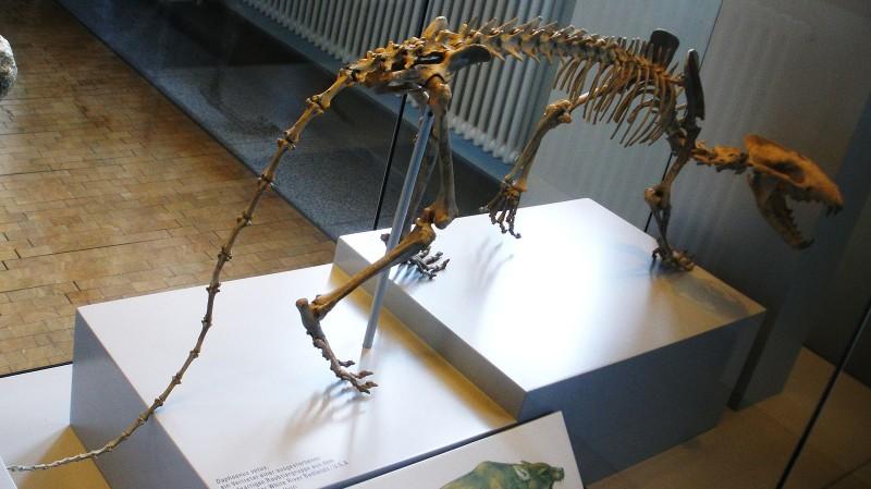Daphoenus vetus