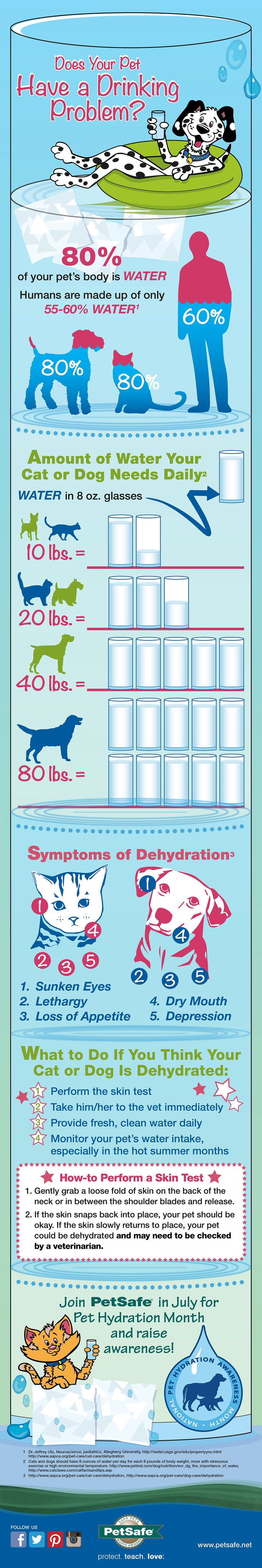 Dehydration In Dogs & Water Needs