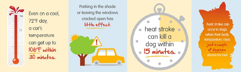 Summer Facts For Dogs!