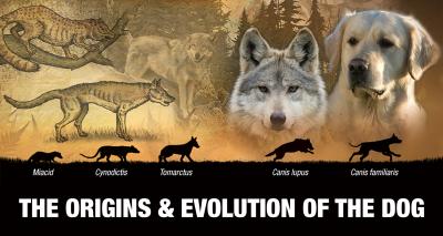 Origins & Evolution Of The Domestic Dog