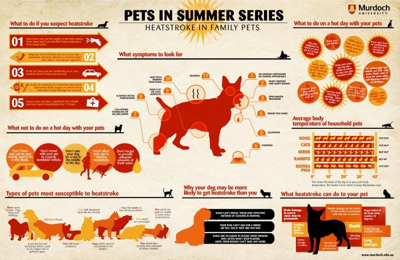 pets and dogs during summer