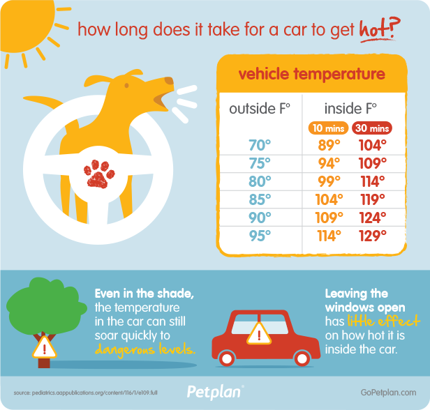 Hot Cars Are Deadly For Dogs During Summer
