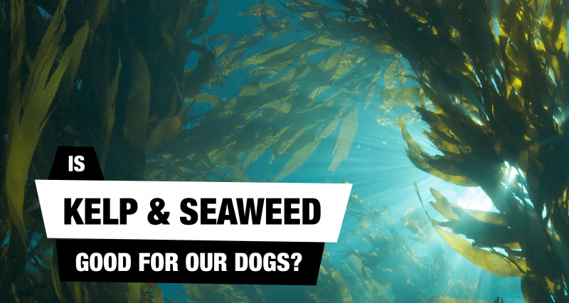 Are Seaweed & Kelp Nutritionally Good For Dogs?